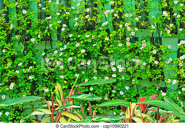 Flowers over bamboo - csp10990221