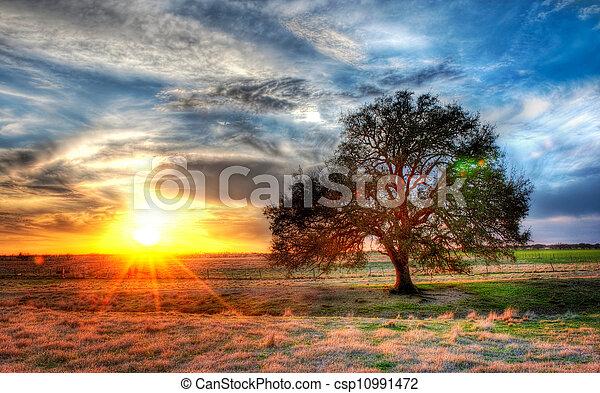 lantgård, solnedgång,  Texas - csp10991472