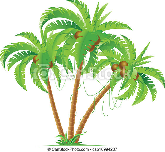 Three coconut palms - csp10994287