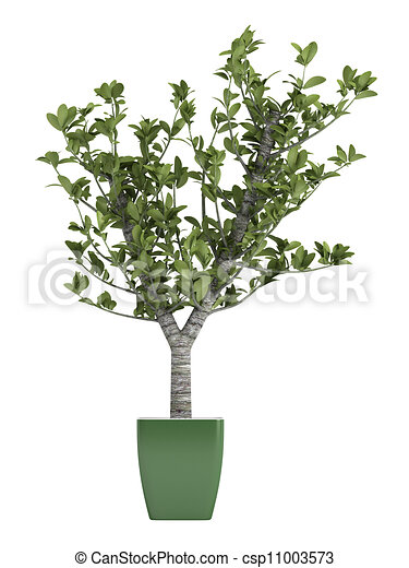 illustrations de bonsai arbre vert pot isol blanc. Black Bedroom Furniture Sets. Home Design Ideas