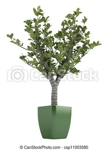 illustration de bonsai arbre vert pot isol blanc. Black Bedroom Furniture Sets. Home Design Ideas