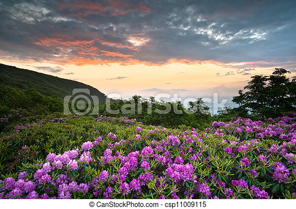 Blue Ridge Parkway Mountains Sunset over Spring Rhododendron Flowers Blooms scenic Appalachians near Asheville, NC - csp11009115