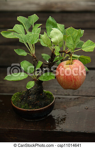stock foto von bonsai baum apfel bonsai miniatur. Black Bedroom Furniture Sets. Home Design Ideas