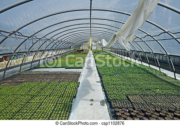 Greenhouse - csp1102876