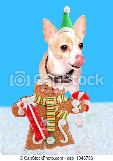 Chihuahua eating gingerbread man - csp11046736