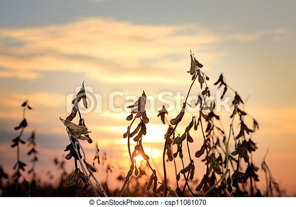 Agriculture - csp11061070