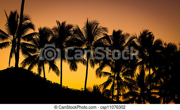 Palm tree at beautiful sunset - csp11076302