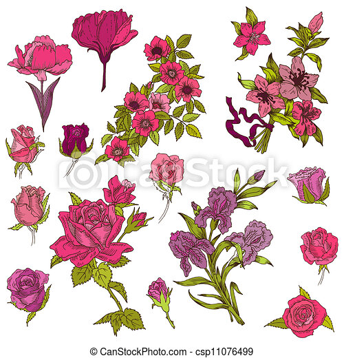 Detailed Hand Drawn Flowers - for scrapbook and design in vector - csp11076499