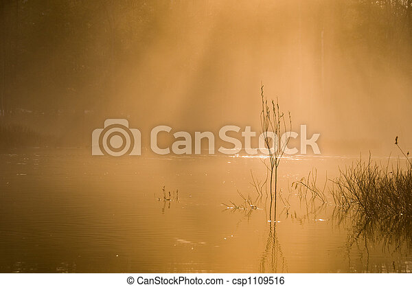 Morning Mist - csp1109516