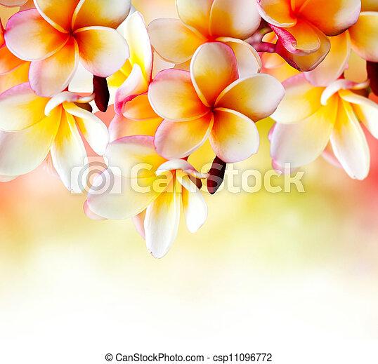 Frangipani Tropical Spa Flower. Plumeria Border Design  - csp11096772
