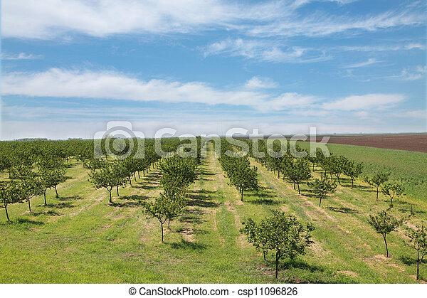 Agriculture - csp11096826