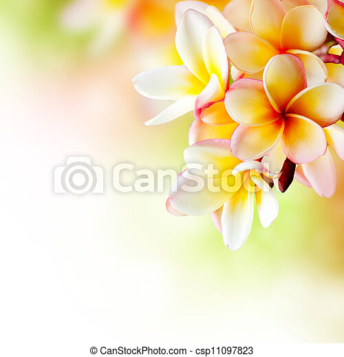 Frangipani Tropical Spa Flower. Plumeria Border Design - csp11097823