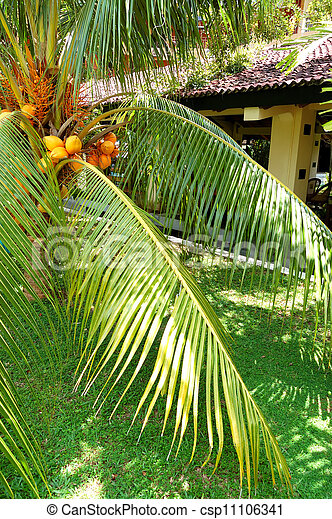 The palm tree at luxury hotel, Bentota, Sri Lanka - csp11106341