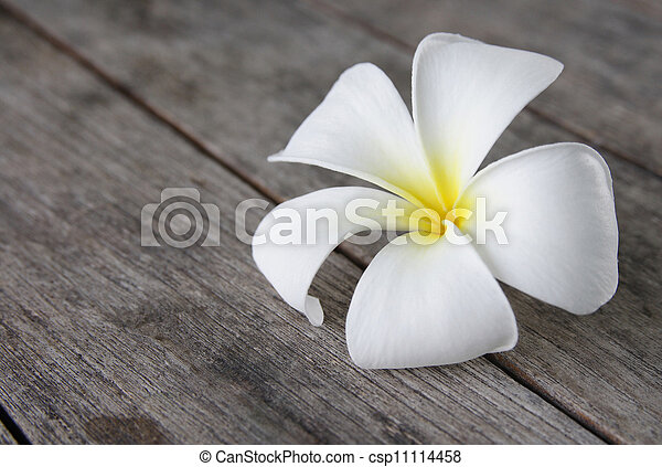 Tropical flowers frangipani (plumeria) on wood - csp11114458