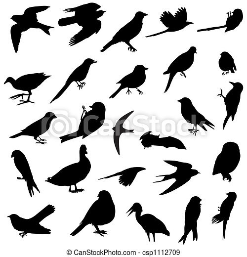 Birds silhouettes - csp1112709