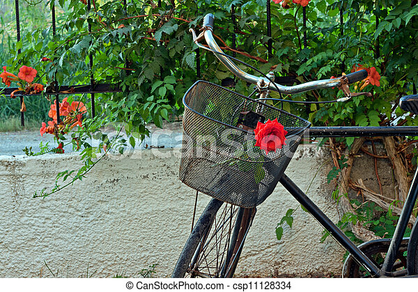 Red rose in basket of old rusty bicycle - csp11128334