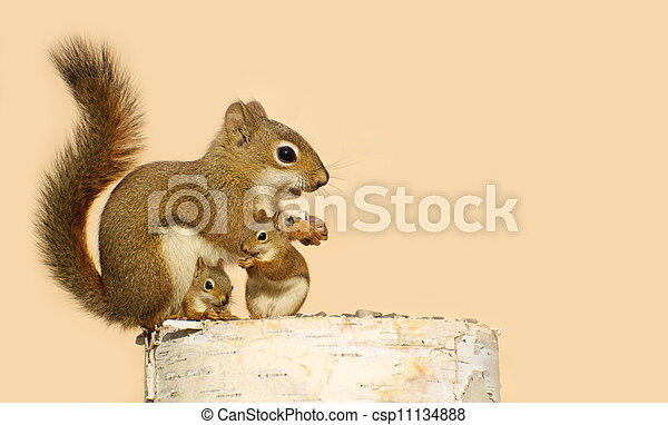 Cute image of a mother squirrel and her two babies eating sunflower seeds on a birch log in the spring with copy space.