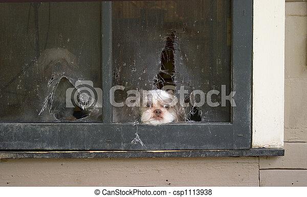 Puppy Daydreams of Escape - csp1113938