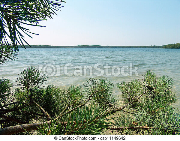 Lake in the pine forest - csp11149642