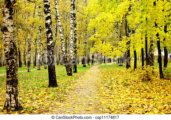 Colorful autumn forest in october rainy weather