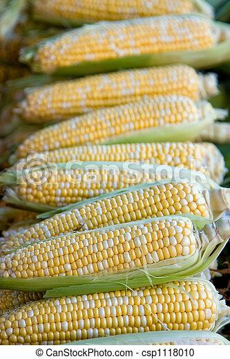 Corn cobs - csp1118010