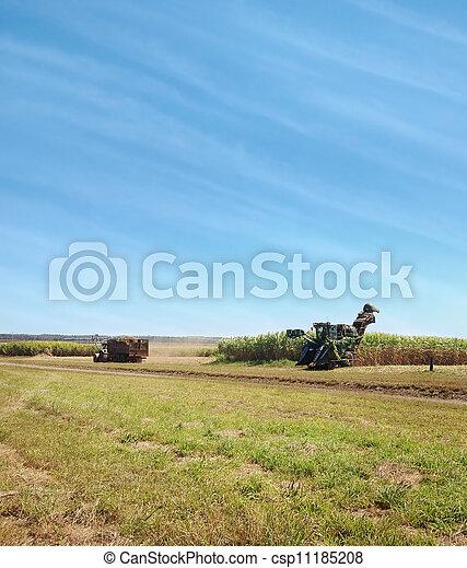 Australian agriculture sugarcane harvesting - csp11185208