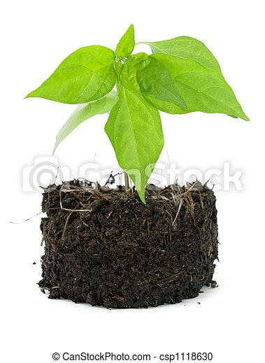Pot plant with its compost exposed against a white background - csp1118630