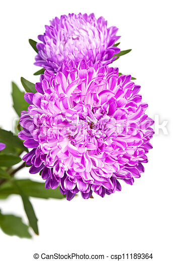 Flowers on white background - csp11189364