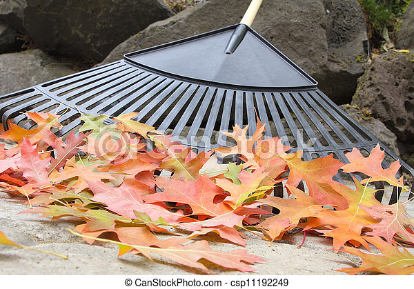 Raking Fallen Oak Leaves Closeup - csp11192249