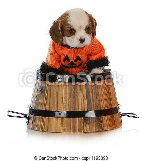 halloween puppy - csp11193393