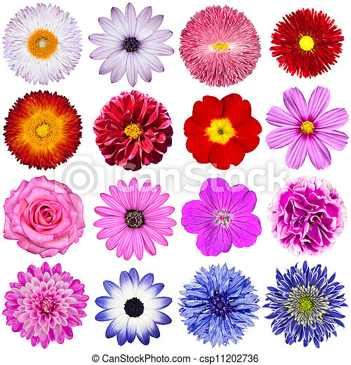 Selection of Various Flowers Isolated on White Background - csp11202736