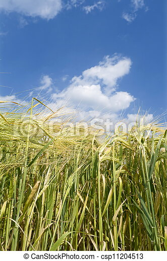 農業 - csp11204513