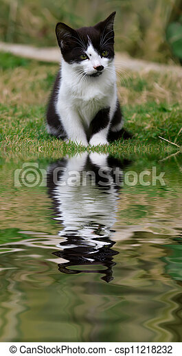Cute Kitten with reflection - csp11218232