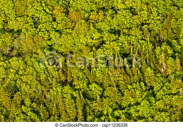 aerial view of green trees forest  in quebec canada - csp11236338