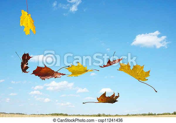 autumn falling leaves - csp11241436