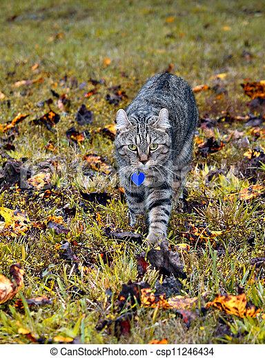 cat lynx autumn foliage - photo #11