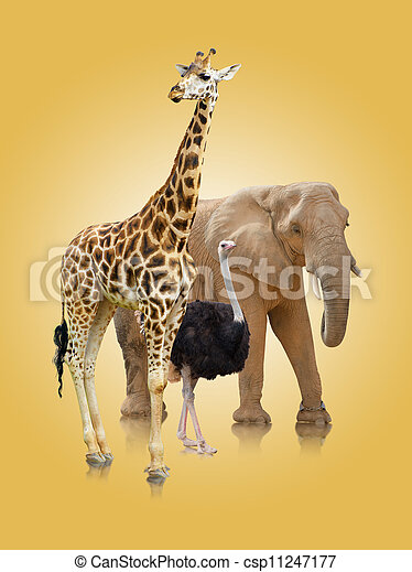 Small Group Of Animals