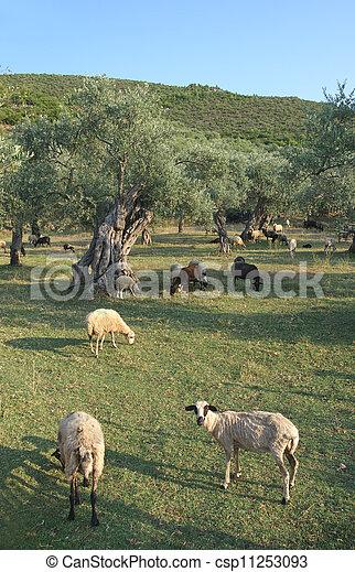 Agriculture - csp11253093
