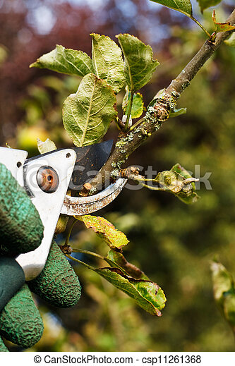 pruning in the garden - csp11261368