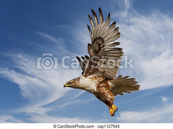 Ferruginous Hawk - csp1127543