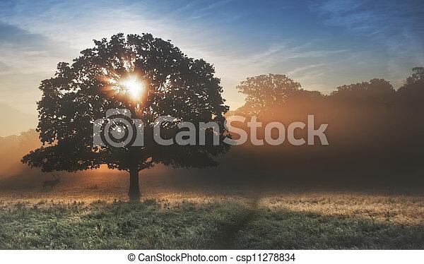 Sunrise sunbeams bursting through tree onto foggy landscape - csp11278834