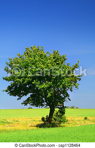 green grass field and a lonely tree - csp1128464