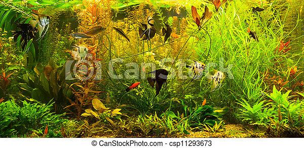 image de ttropical eau douce aquarium poissons a vert beau csp11293673 recherchez. Black Bedroom Furniture Sets. Home Design Ideas
