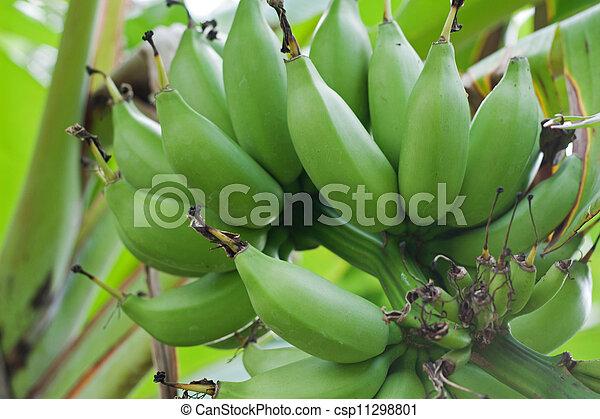 Green bananas - csp11298801