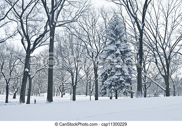 Winter Scene Central Park - csp11300229