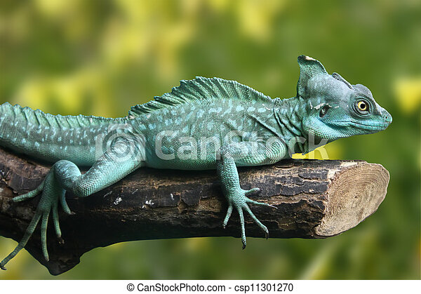 Beautifull picture of green lizard (Basiliscus plumifrons)