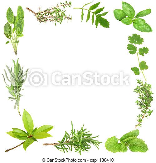 Organic Herbs - csp1130410