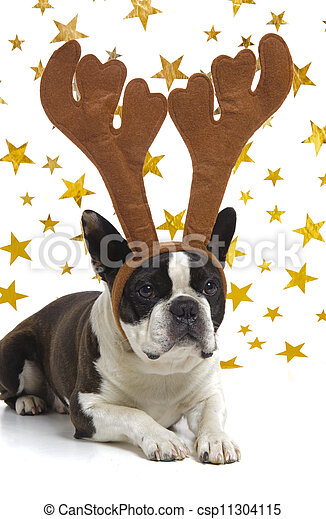 funny dog at christmas with antlers - csp11304115