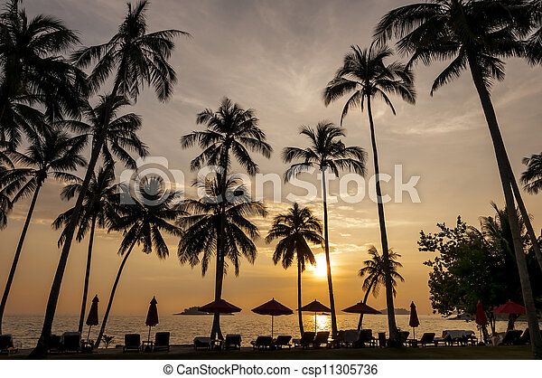 Coconut palms on sand beach in tropic on sunset - csp11305736