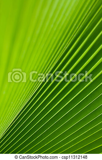 Green palm tree leaf as a background - csp11312148